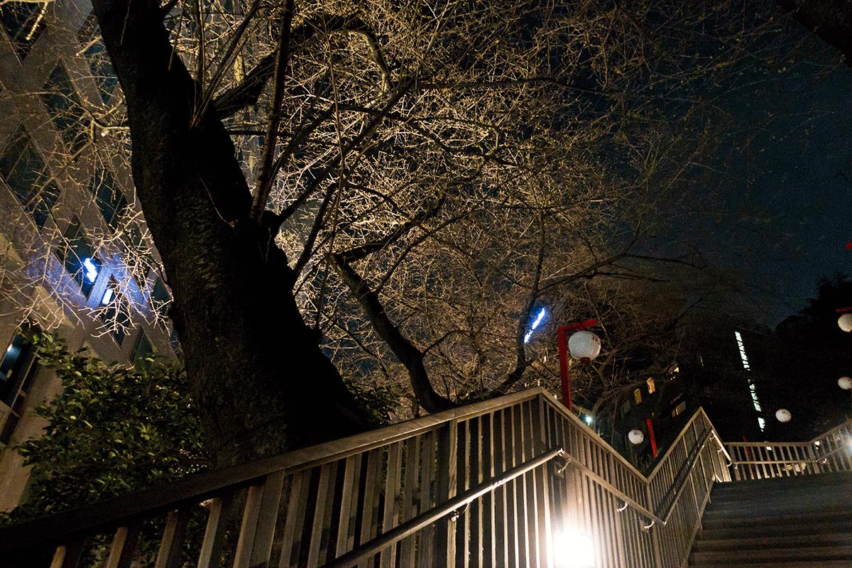 ザ・プリンスさくらタワー東京 さくら祭