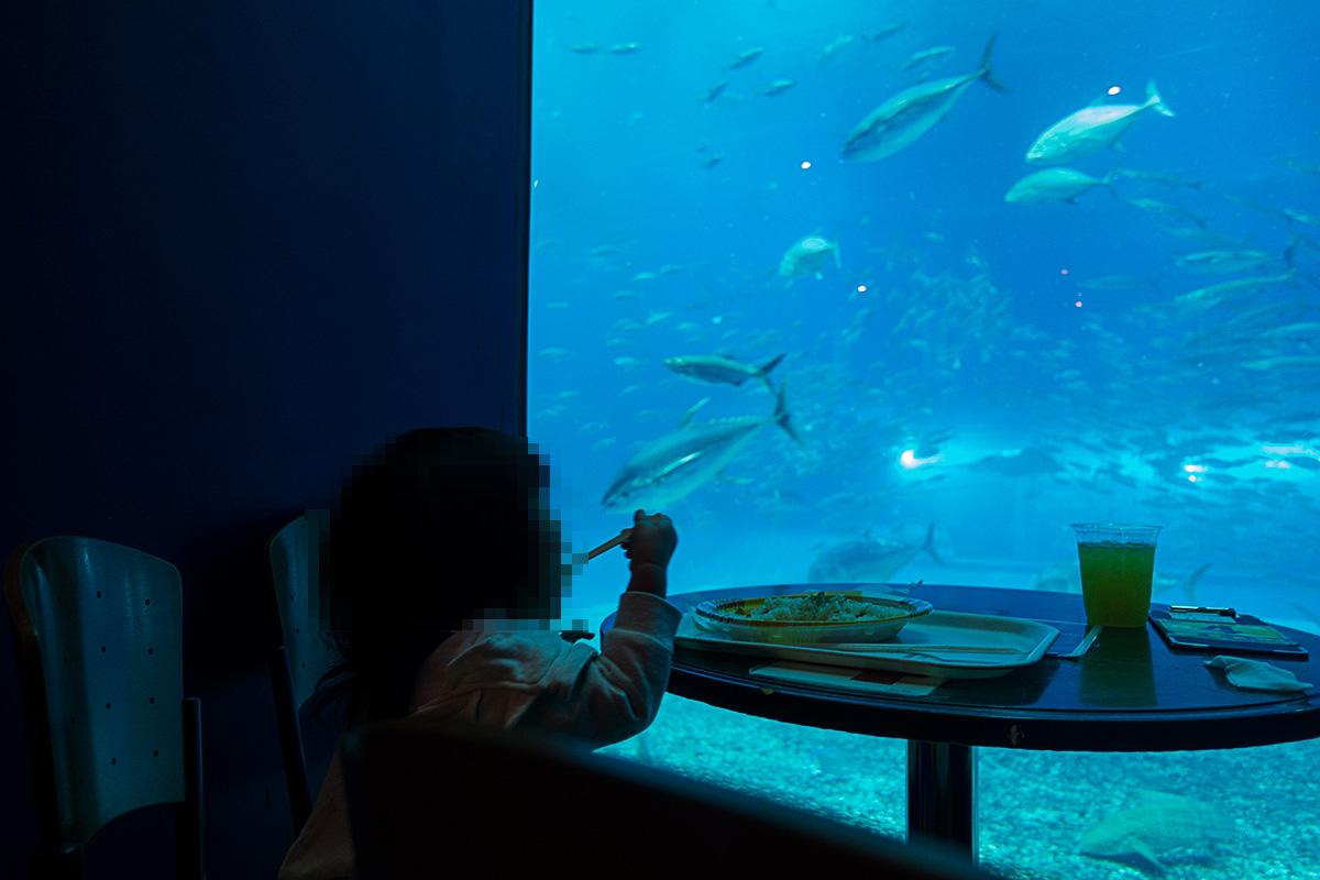美ら海水族館のカフェ「オーシャンブルー」に待ち時間なしで入店