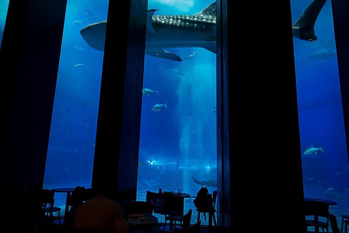 美ら海水族館のカフェ「オーシャンブルー」から見た大水槽