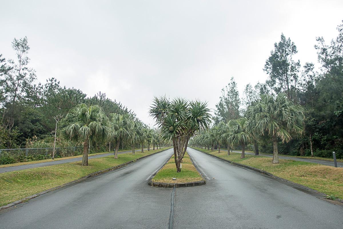 ザ・リッツ・カールトン沖縄へと向かう道