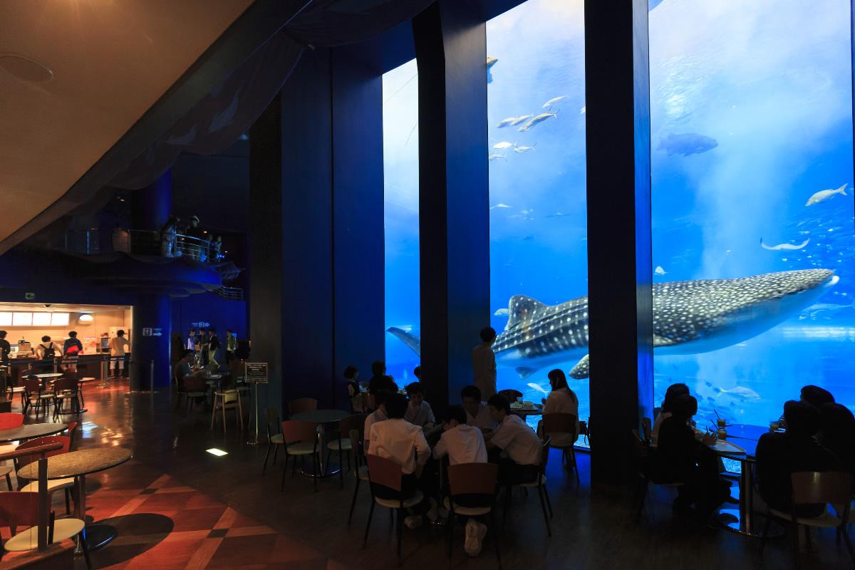 美ら海水族館のカフェ「オーシャンブルー」